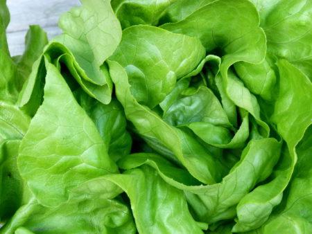 Grüner Freilandsalat