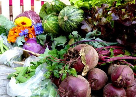 Gemüse im Juli 3